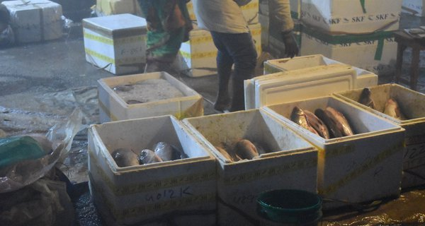 Fish being loaded into ice boxes, Bihar, India.
