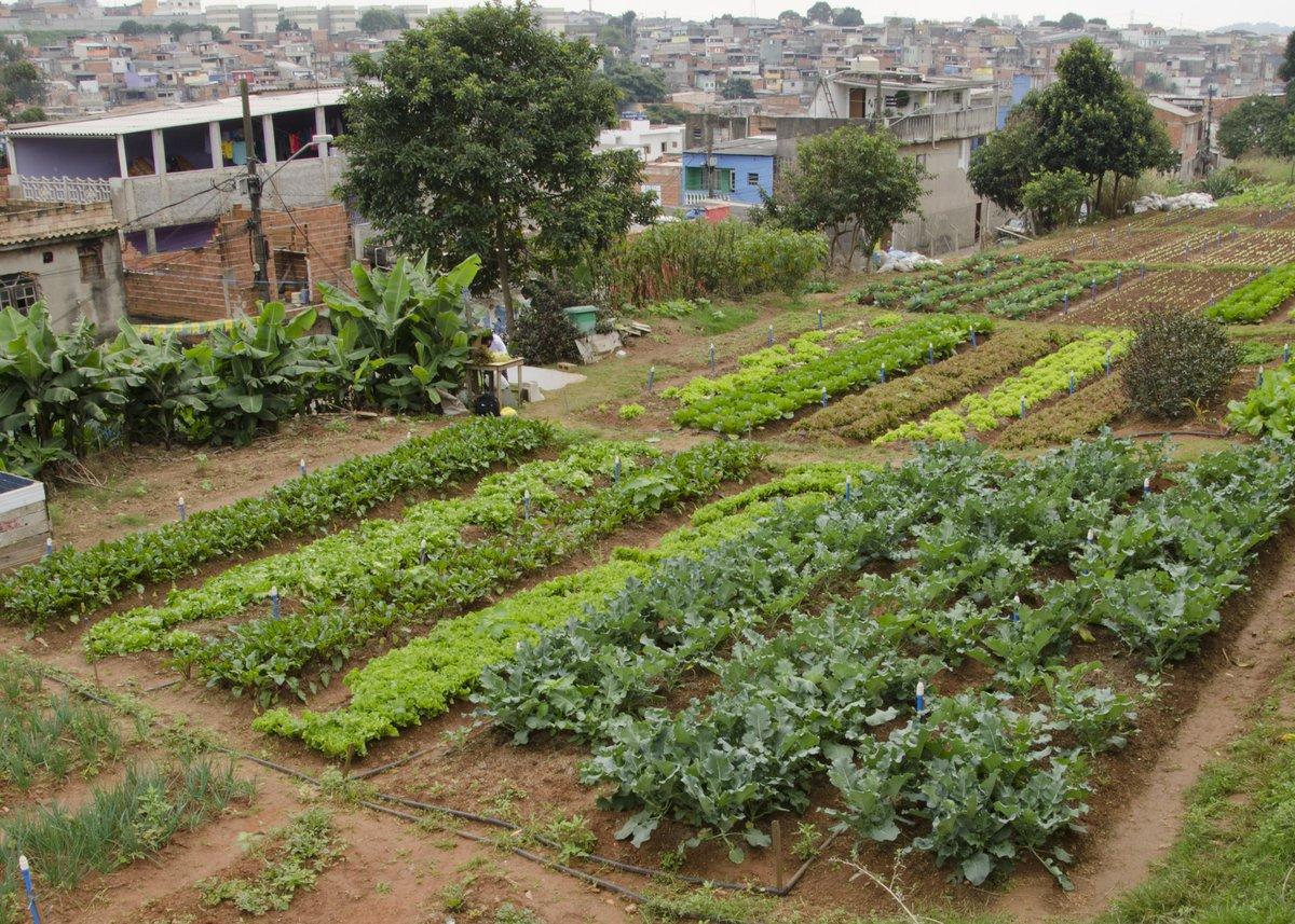 Cidades sem Fome - garden