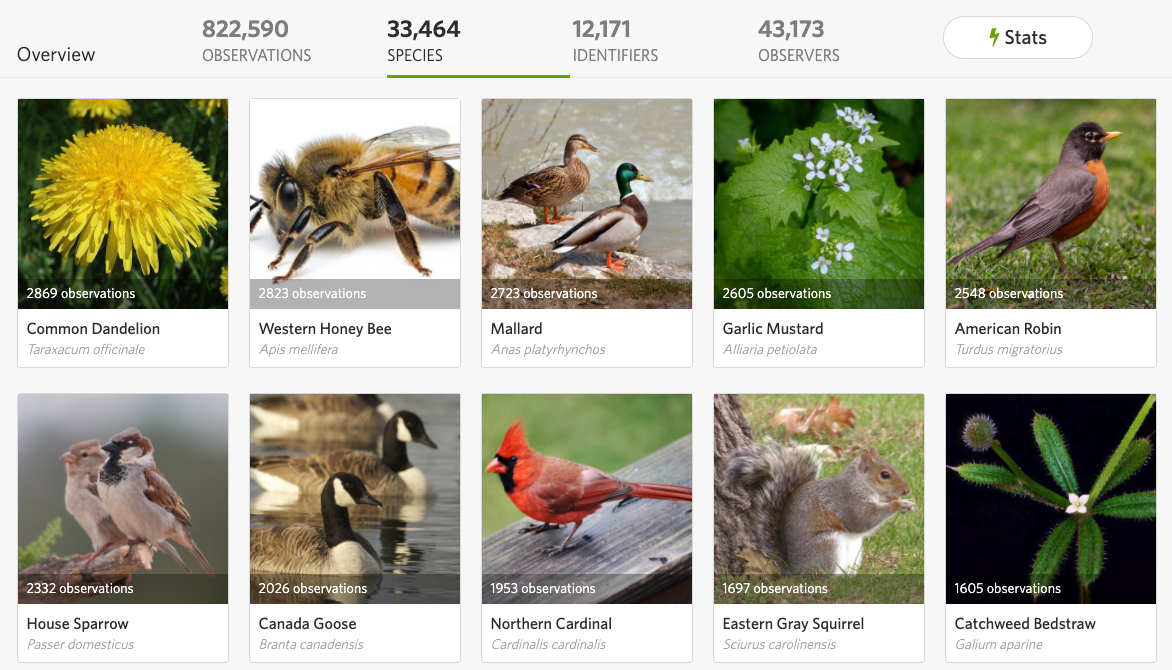 Species listings on inaturalist website presented in grid view with accompanying animal images