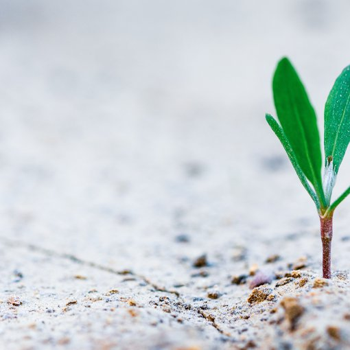 Growth is what happens in nature too
