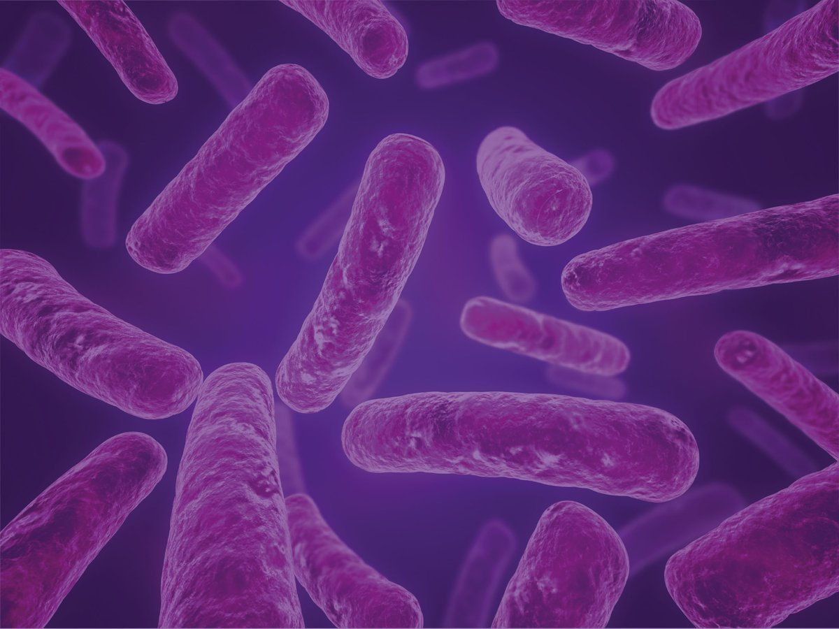 Bacteria - Longitude Prize banner