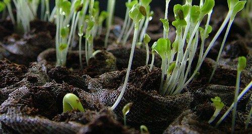 baigne_par_le_soleil_cc_seedlings.jpg