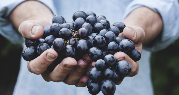 grapes-maja-petric.jpg