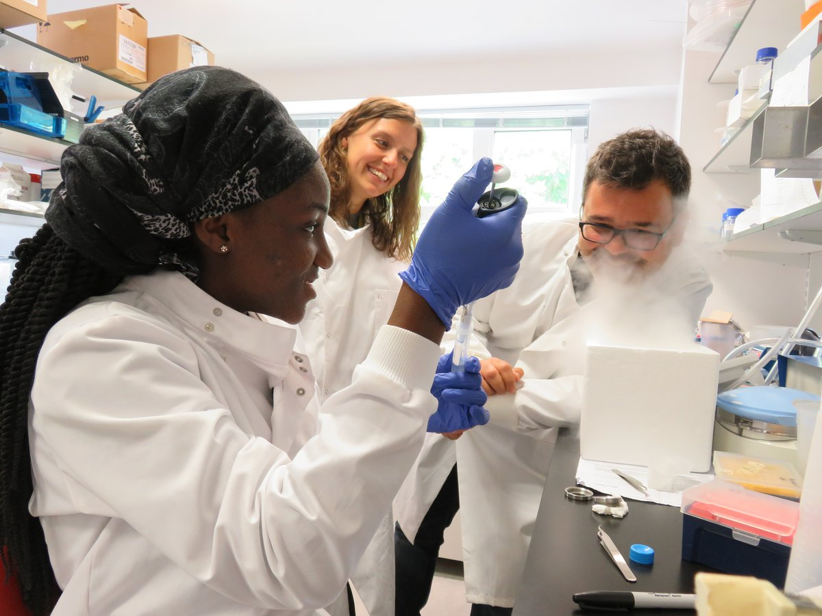 The In2ScienceUK programme in action