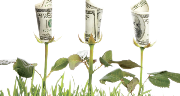 money_flowers_1.png