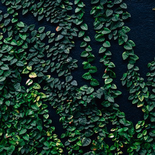 Plant climbing up wall