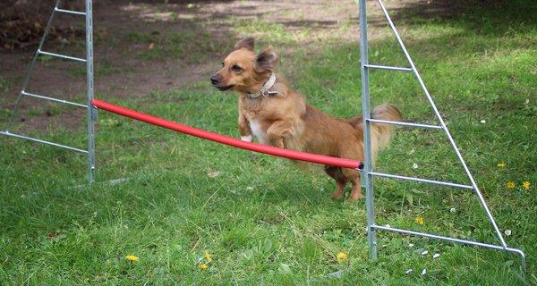 small-dog-1406296_1920.jpg