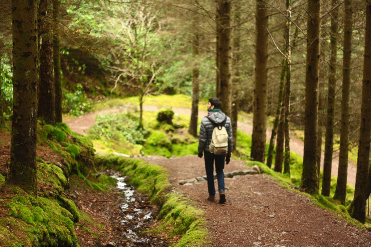 Man explores forest