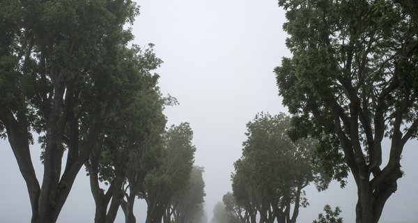 trees_and_fog.jpg